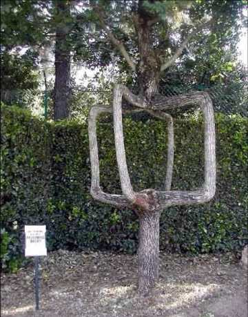 Sculpted Tree 1