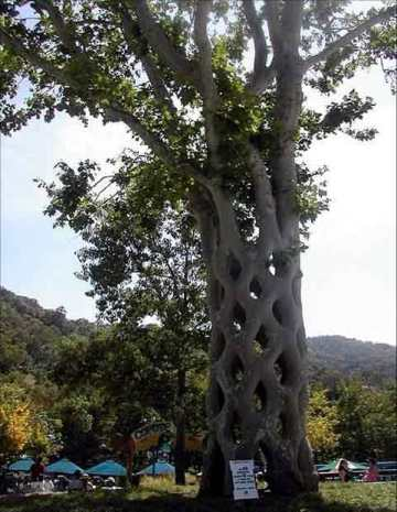 Sculpted Tree 2