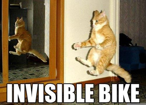 Cat on an Invisible Bike