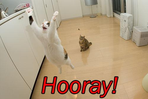 Cat hooray