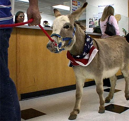 Donkey in Court