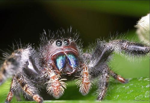 Yet another cute spider