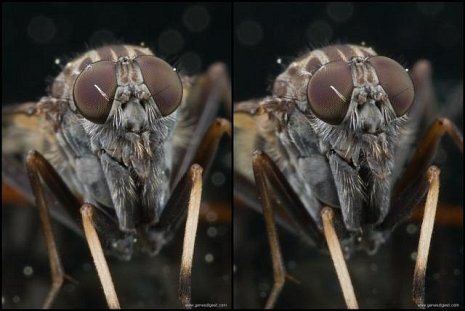 3d insect stereogram