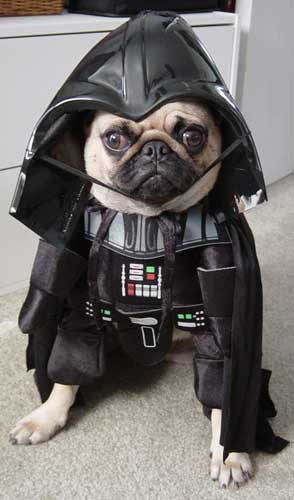 i find your lack of kibbles disturbing.
